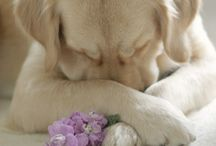 I loveee dogs / Unconditional love...