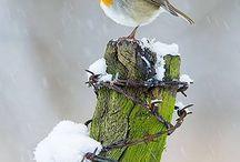 55. Inheemse vogels / Nederland