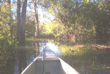 Canoeing / Beautiful paddle through the hidden channels of the Columbia Wetlands!