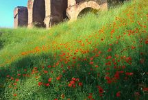 XXXXIII Ancient Roman Sites