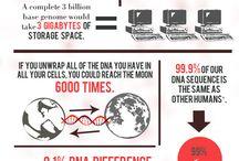 Infographics and Stateeztics