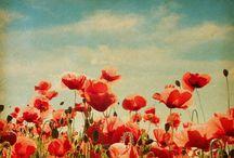 Flowers / Vintage flowers