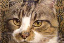 kočky a jiná zvířena