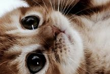 ANIMALSSSSSSSSSSSSSSSSSSSS SO CUTEEE / SO CUTE ANIMALS!!!!!!!!!!!!!!!!!!!!!!!!!!!!!!!!