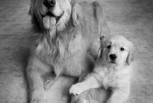 Puppy Dogs / by Angela Matheson