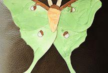 Butterflies moths