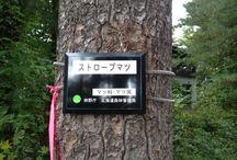 「見本林」(外国樹種見本林) / 「見本林」(外国樹種見本林)(北海道旭川市)に関連するボードです。見本林の木々や花々、動物など、豊かな自然と人々の癒しの風景です。