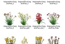 Additional Plant Libraries for GreenScapes Landscape Design Software / When designing landscape contractors could never have enough plants. We add additional plants to the program via the down center http://www.ImagingLibraries.com must be a client and have a user name and password.