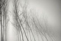 Туманидзэ