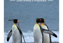 Dzień Pingwina