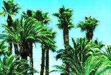 Beaches & Palm Trees by Dietmar Scherf / Art photographs of Beaches and Palm Trees by Dietmar Scherf.