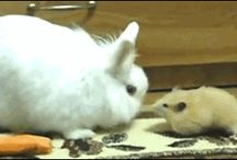 bunnies Who make you laugh