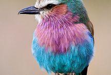 I Love birdies