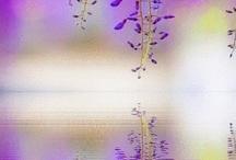 Lilac and mauve through to deep purple