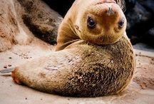 Amazing animals -