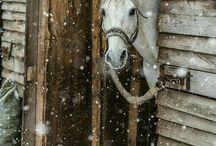Horses forever❤