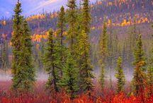 ALASKA / by Pat Williams