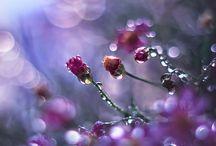 yağmurda çiçekler