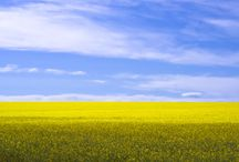 Fält och ängar