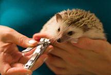for my pet hedgehog Luna