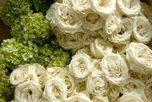 learn 2    love Flowers / #flowers