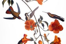 Birds. Hummingbirds and others. / by Swallowtail Garden Seeds