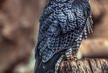Vtáky / Priroda