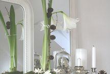 Elegante Amaryllis - Rittersterne vs Novembergrau