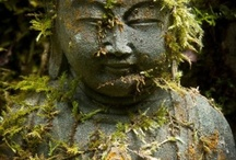 keeping zen. / by Sarah Sandridge
