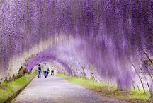 Places / Beautiful places that will mesmerize you!