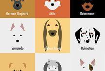 Coisas de cães