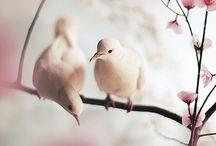 Photography ♥ / Inspiration von schöner Fotografie