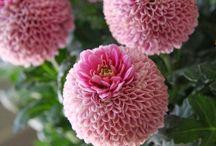 Веаutiful flowers