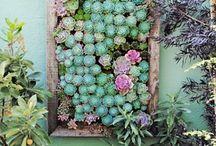 My Secret Garden / by ElegantShells