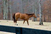 Horses Of FMNR / Fredonia Mountain Nature Resort is the perfect home to these beautiful animals.