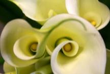 Flowers / by Brenda DeLano
