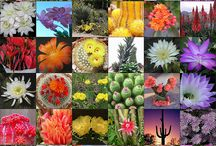 Cactus and succulents / by Vicky Garrison