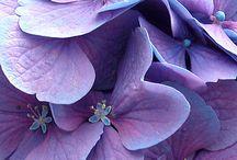 Violet / Purple