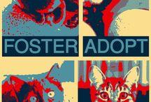 Foster Adopt Donate Rescue