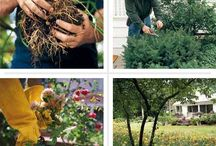 Gardening / by Kimberly Bartosch Boone