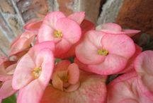 FloraandPlant