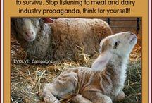 Vegan, WHY? / by Francesca Haas