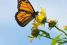 Butterflies / by Chicago Botanic Garden