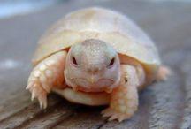 Turtleeeee