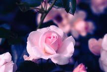 flores @-}--