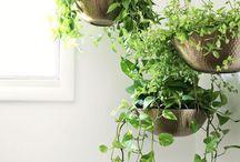 Hanging planters diy