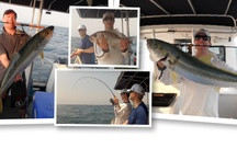 Brisbane and Moreton Bay Fishing Charters (Queensland)
