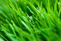 ➤ GRASS
