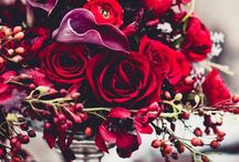 Flowers & Plants / by Lisa Chia