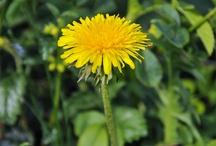 Flowers - Plants-Gardens
